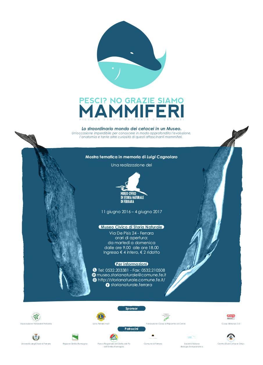 """""""Pesci? No, grazie, siamo Mammiferi!"""" La mostra al Museo di Storia Naturale di Ferrara, con il sostegno anche di Coop Alleanza 3.0"""